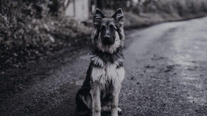Historia psa domowego