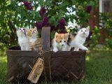 Małe kotki w koszyczku.