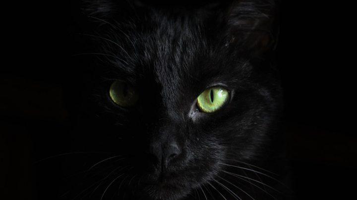 Koci wzrok