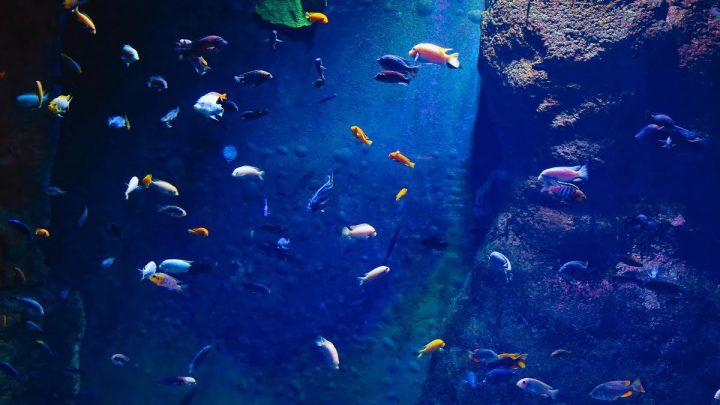 Komunikacja między rybami