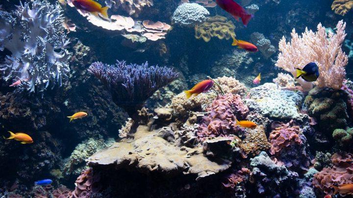 Żółte ryby na tle rafy koralowej.