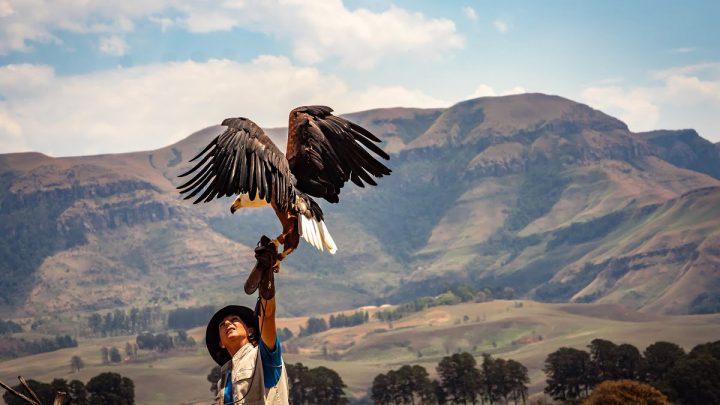 Ptaki w ochronie obiektów i plantacji
