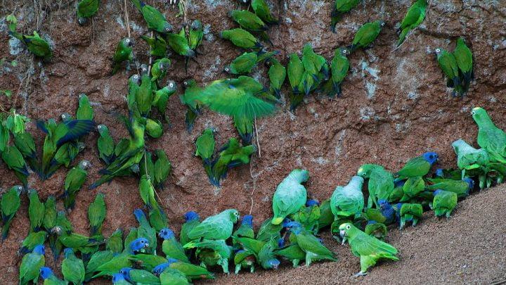 Grupa ptaków siedzących na ziemi.