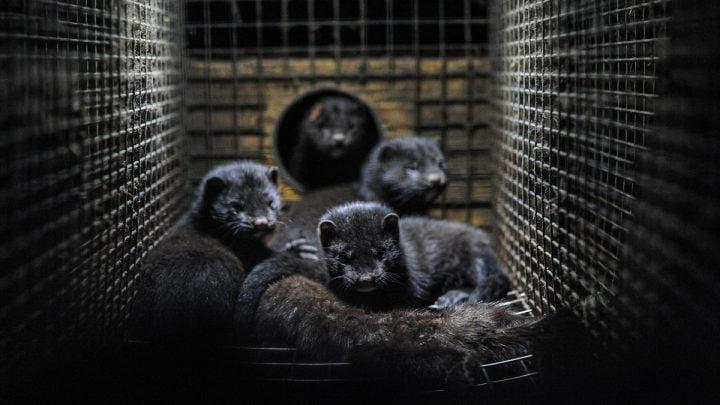 Cztery ciemne norki znajdujące się w klatce.