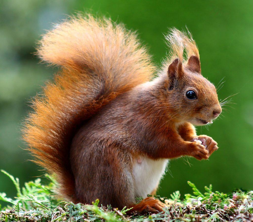 Najinteligentniejsze zwierzęta świata - Wiewiórka