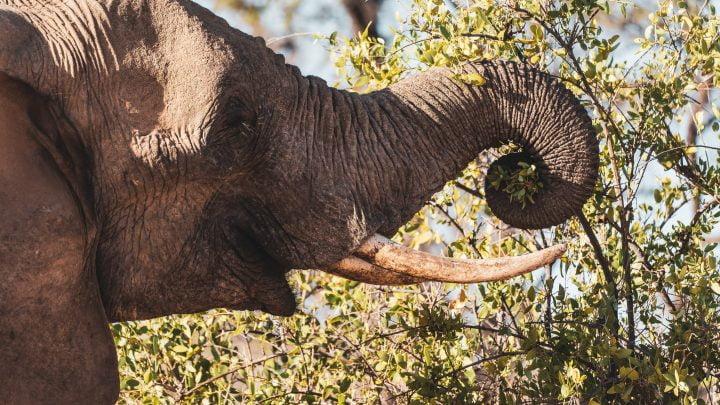 Największe zwierzęta świata