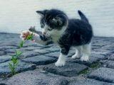 Wybór kociaka z miotu