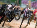 Wyścigi psów