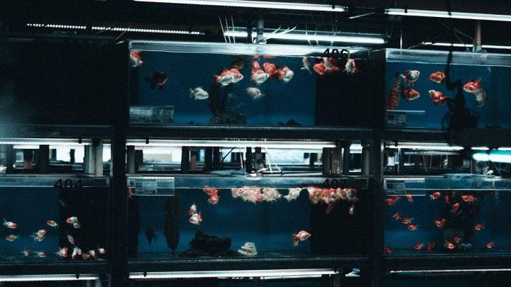 Sprzątanie akwarium