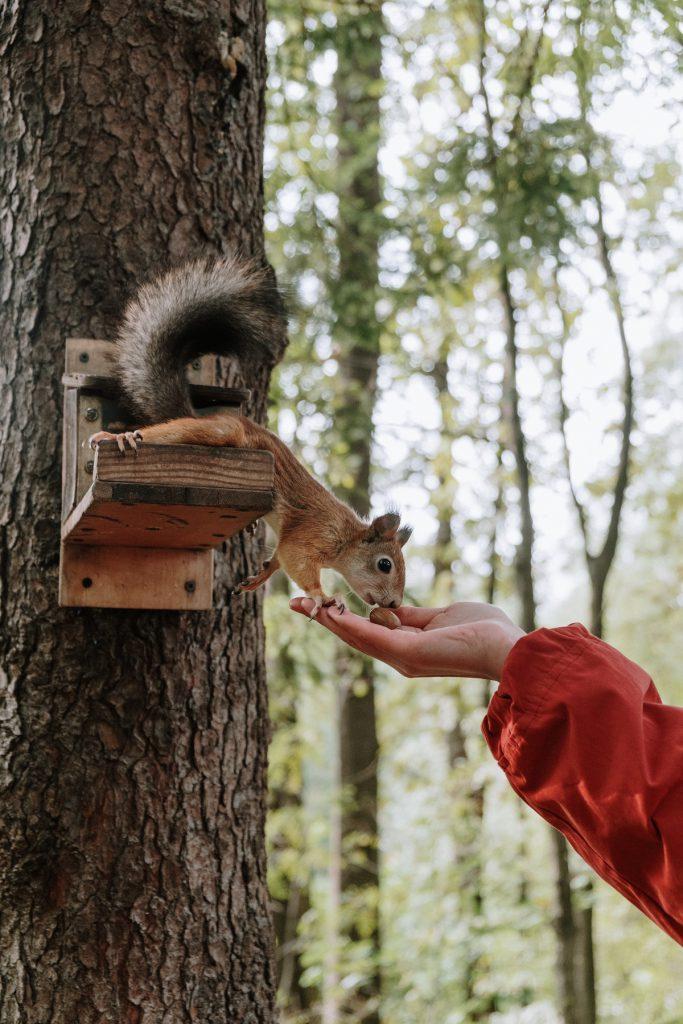 Zmysły wiewiórek
