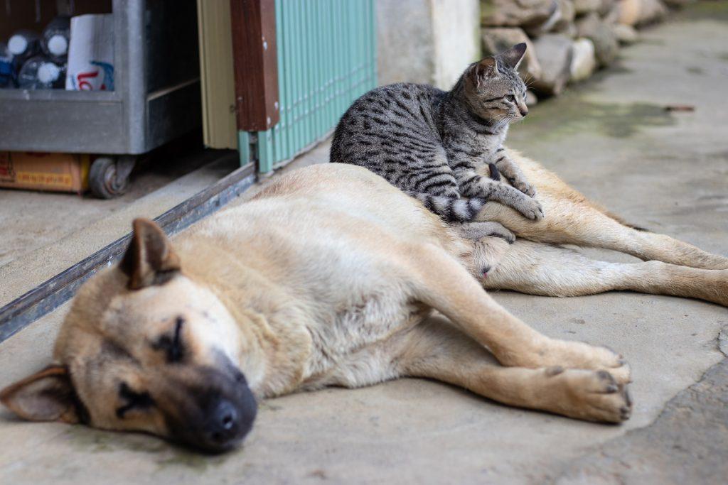 Zwierzęta domowe