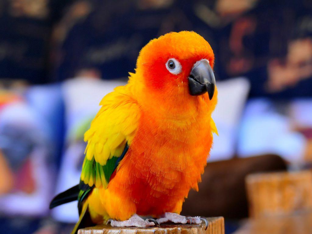 Zwierzęta potrafią liczyć - Papuga