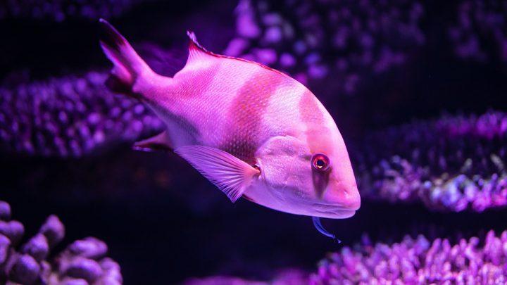 Choroby grzybicze ryb