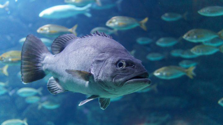Choroby pasożytnicze ryb akwariowych