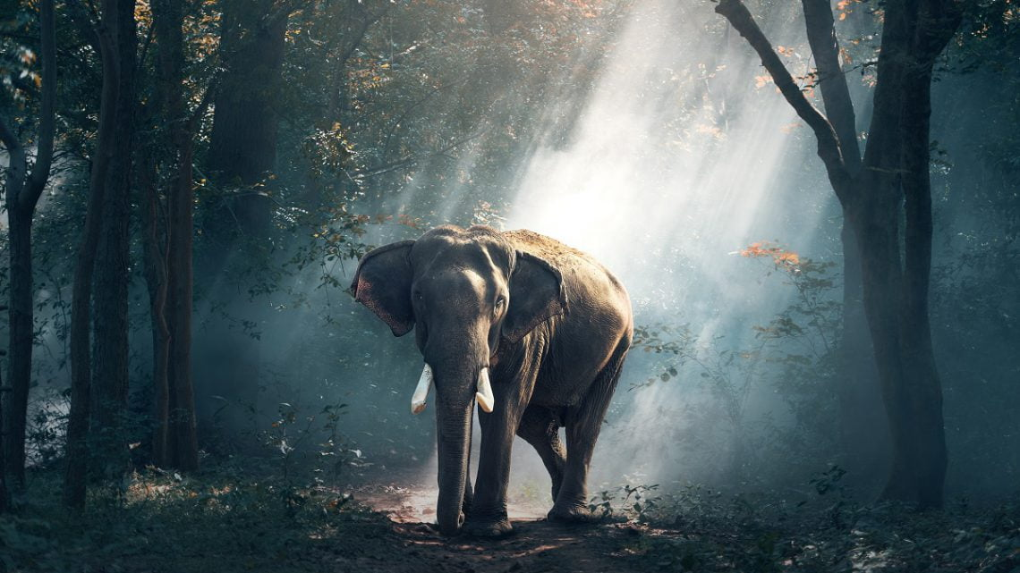 Empatia słoni
