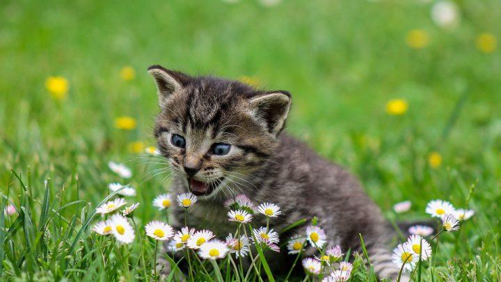 Ochrona kota przed kleszczami
