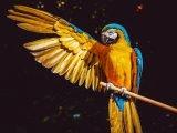 Ptasi słuch