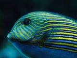 Zmysły ryb