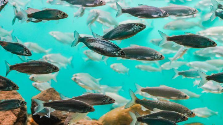 Życie rodzinne ryb