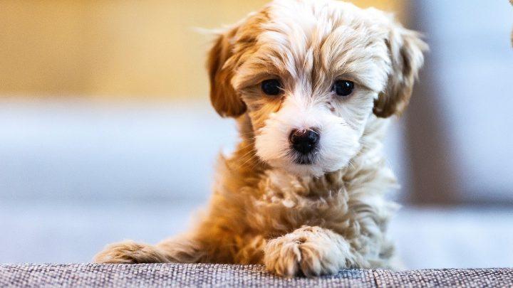 Jak oduczyć sikania psa w domu?