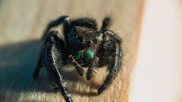 Opieka nad pajęczakami
