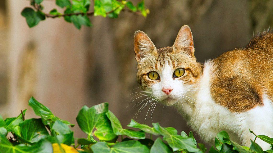 Terytorialna rywalizacja kotów