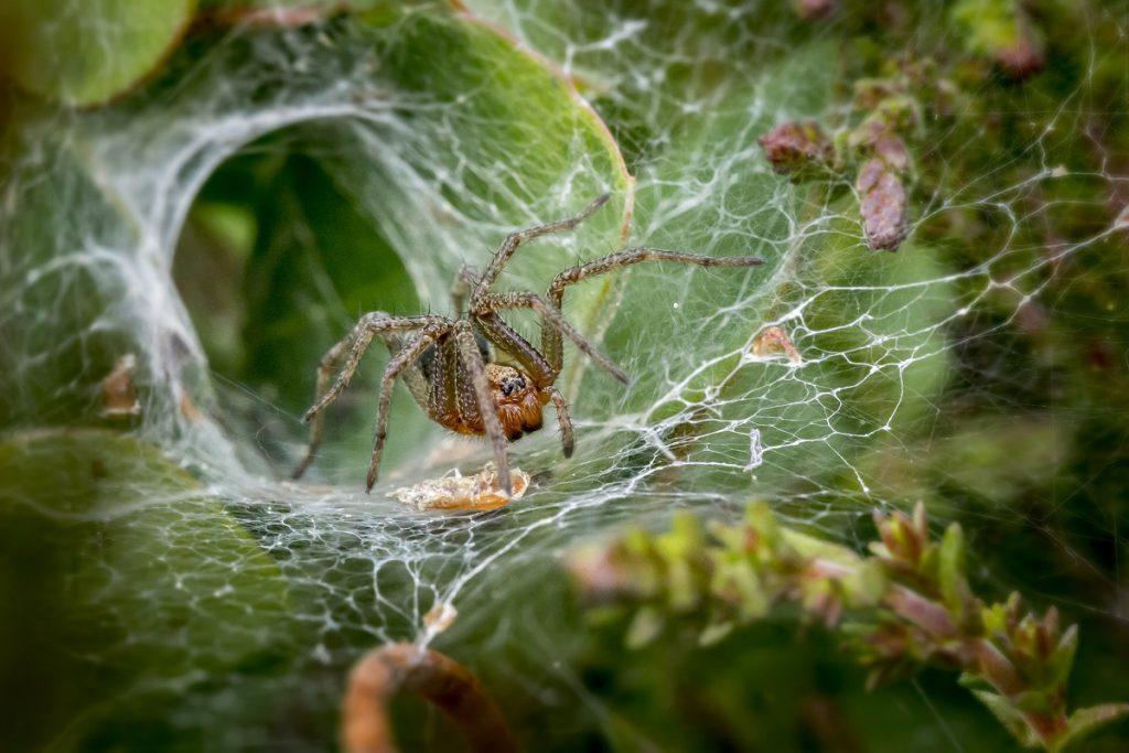 Żywienie i zdrowie pajęczaków