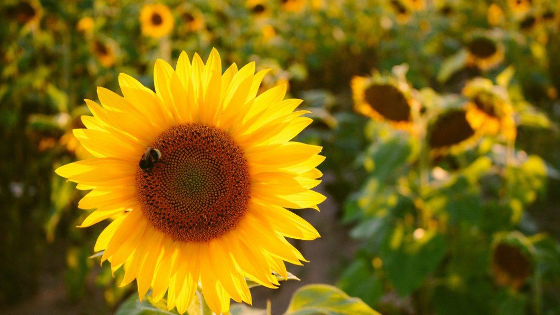 Bez pszczół nie ma życia
