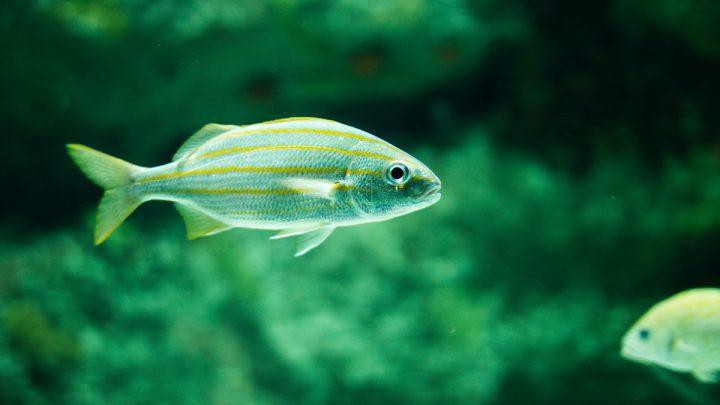 Choroby wirusowe ryb