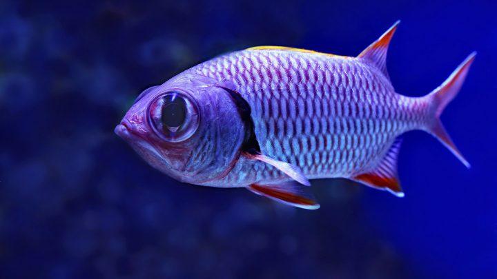 Dlaczego ryby wydają dźwięki
