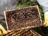 Opieka nad pszczołami