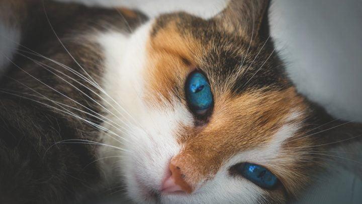 Pielęgnacja kocich oczu