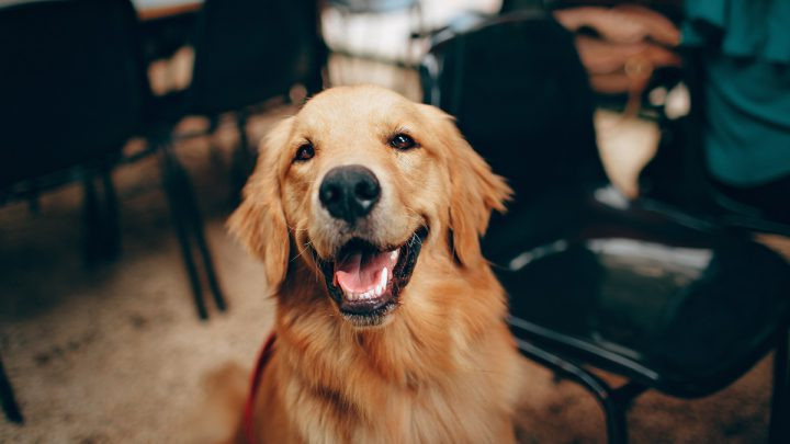 Psie zęby
