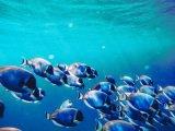 Zachowanie terytorialne ryb