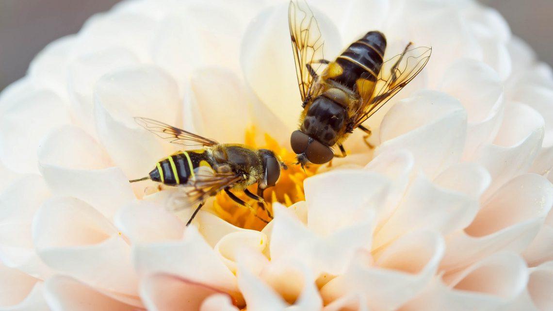 Żywienie i zdrowie pszczół