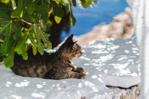 Ile żyją koty?