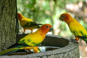 Żywienie i zdrowie papużek nierozłączek
