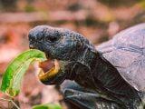 Żywienie i zdrowie żółwi